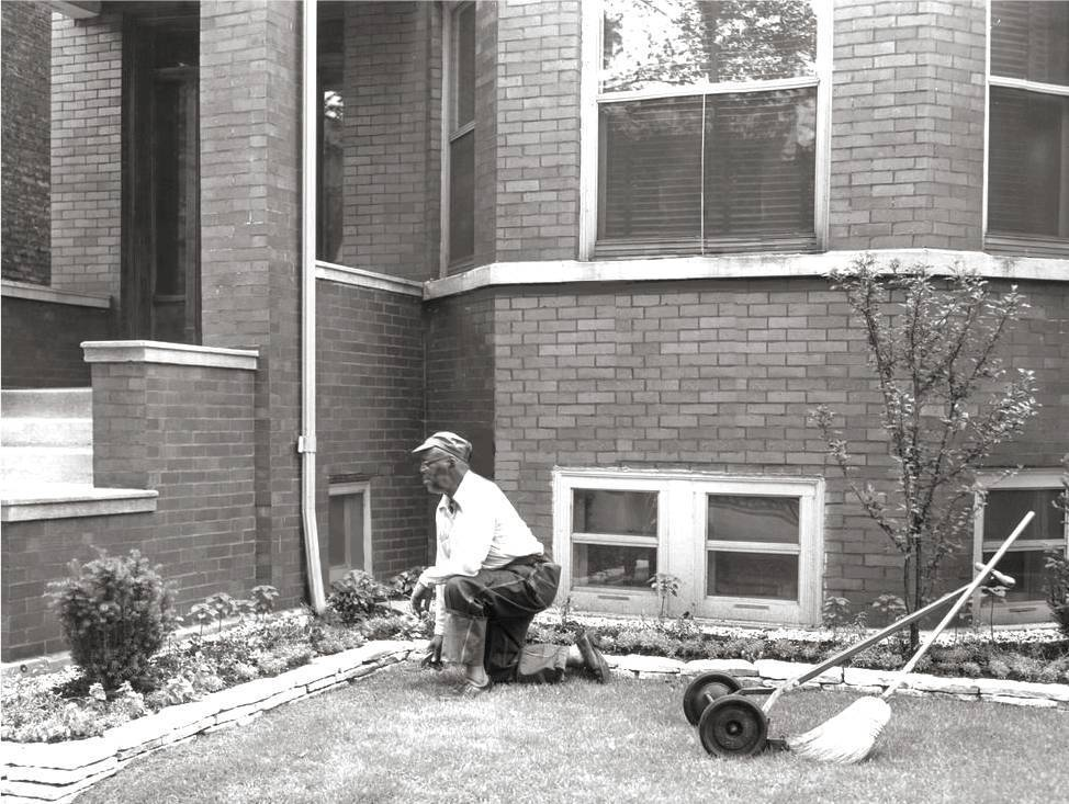 PHOTO - CHICAGO - 6635 S MINERVA - MAN TENDING THE GARDEN  OF A TWO-FLAT - 1953